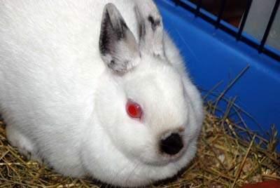 tiervermittlung albino hase tierheime hunde welpen katzen tiervermittlung freiburg. Black Bedroom Furniture Sets. Home Design Ideas