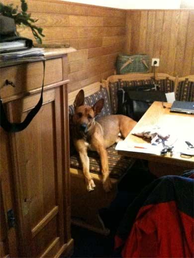 tierheime neue besitzer erz hlen ehemalige tierheimhunde hunde welpen katzen. Black Bedroom Furniture Sets. Home Design Ideas
