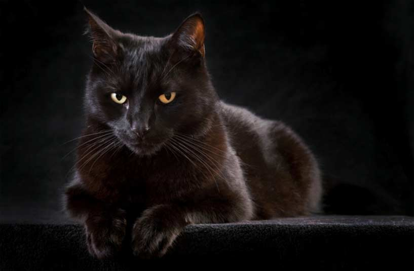 10 Gr 252 Nde Eine Schwarze Katze Zu Adoptieren Grenzenlose Hundehilfe Tierheime Hunde Welpen