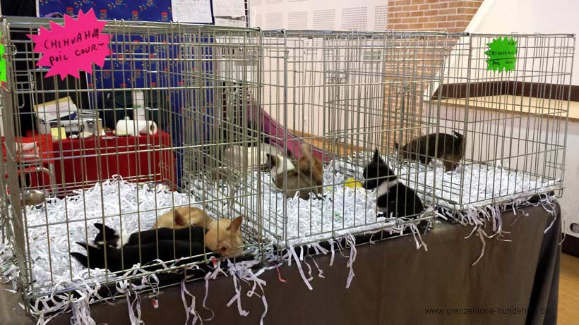 Tiermarkt Hunde