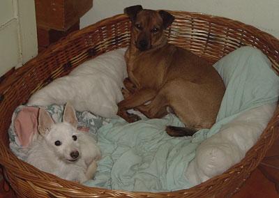 tiervermittlung vermittelt tierheime hunde welpen katzen tiervermittlung freiburg. Black Bedroom Furniture Sets. Home Design Ideas