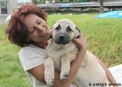 Tiervermittlung Vermittelt Tierheime Hunde Welpen Katzen