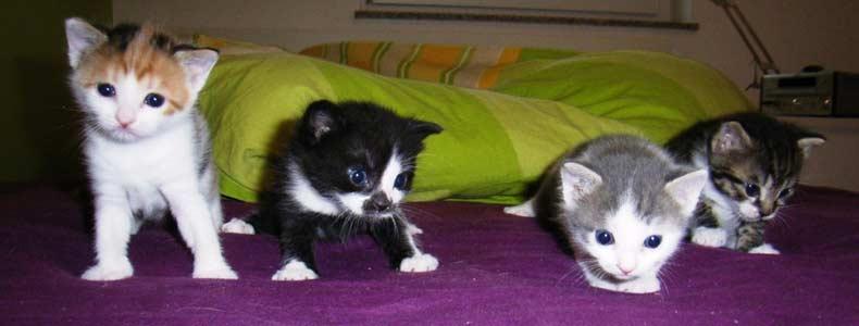 durchfall bei babykatzen