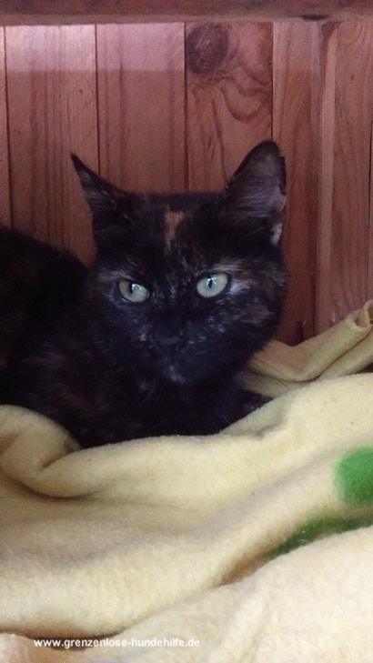 tiervermittlung katzen babykatzen katzenbabys katze. Black Bedroom Furniture Sets. Home Design Ideas