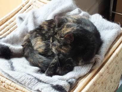 tiervermittlung katzen babykatzen katzenbabys katze welpe freiburg l rrach grenzenlose. Black Bedroom Furniture Sets. Home Design Ideas