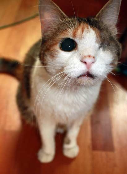 Tiervermittlung Katzen Babykatzen Katzenbabys Katze Welpe