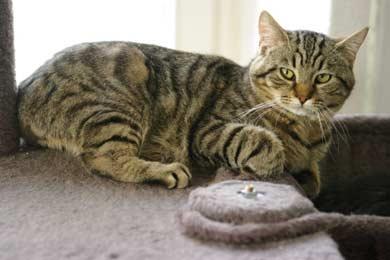 Lustige Katzen Foto